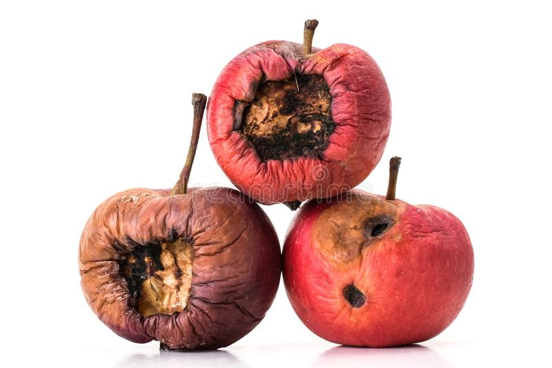 Three rotting apples. Three old and rotten apples on white background stock photos