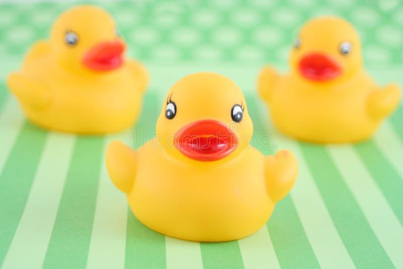 Three rubber duckies royalty free stock photo