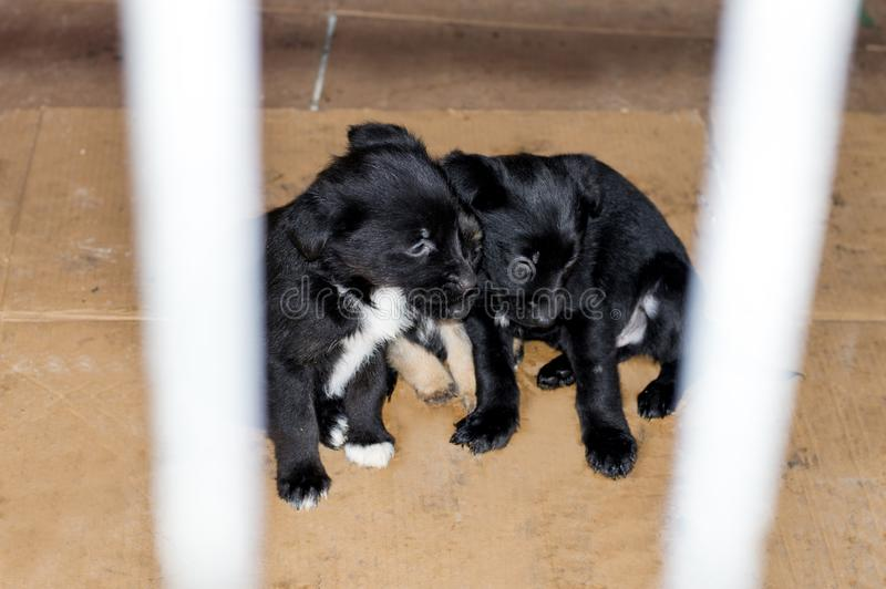 Three sad puppies in their house in the shelter stock images