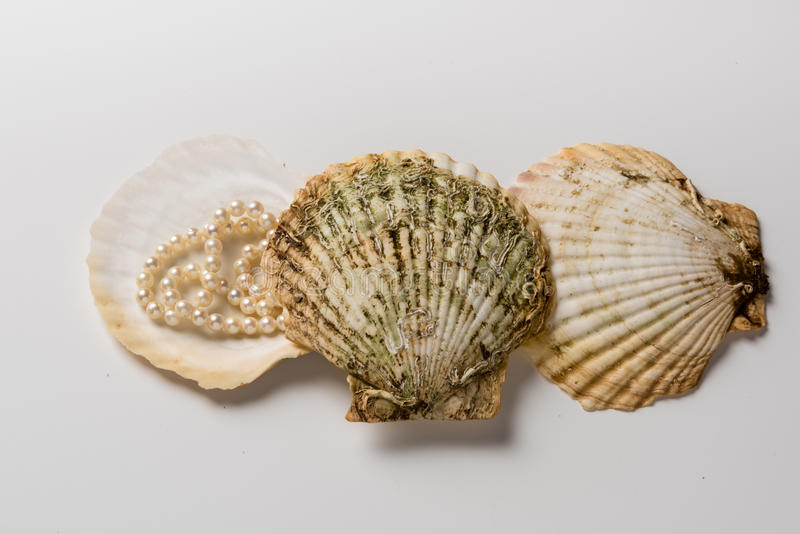 Three scallop shells with pearl necklace stock image