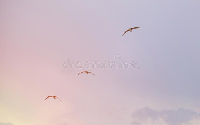 Three seagulls flying over the sea stock photo