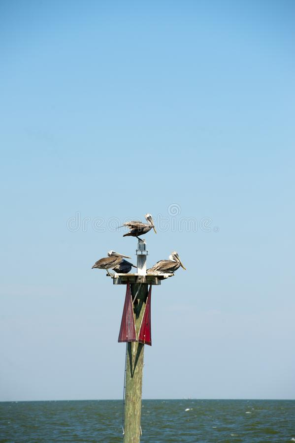 Three seagulls are perched on a buoy marker in Mobile. Bay Alabama stock photo