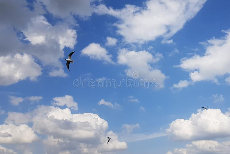 Three seagulls on a summer cloudy day in the sky fly in different directions. royalty free stock image