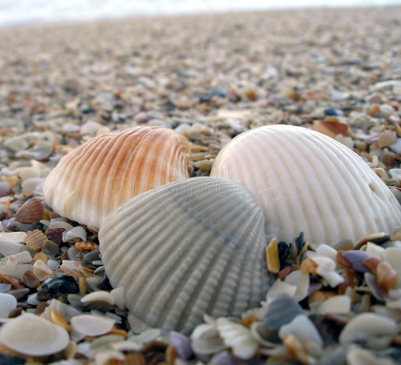 Three Shells at the Beach stock image
