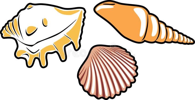 Three shells on white stock illustration