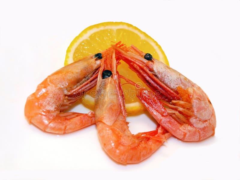 Three shrimps and lemon royalty free stock photos