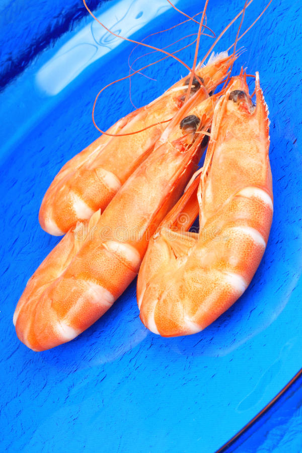 Three shrimps over blue royalty free stock image