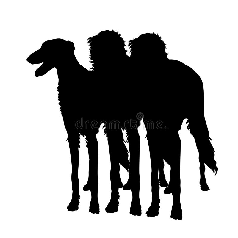 Three sighthound dogs. Silhouettes of three sighthound dogs in full growth. Borzoi or russian wolfhound. Vector illustration isolated on white background stock illustration