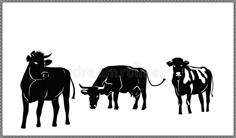 Three Silhouettes Of The Cows Royalty Free Stock Photos