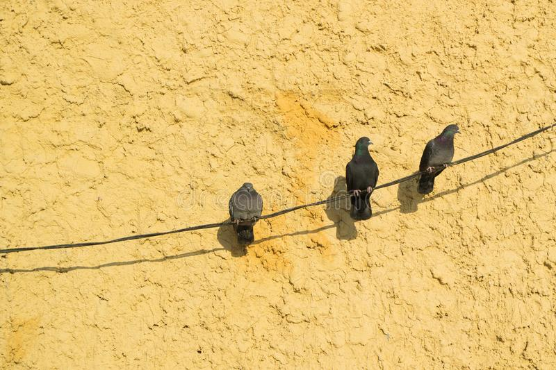 Three sitting in waiting for a dove, background orange wall stock photography