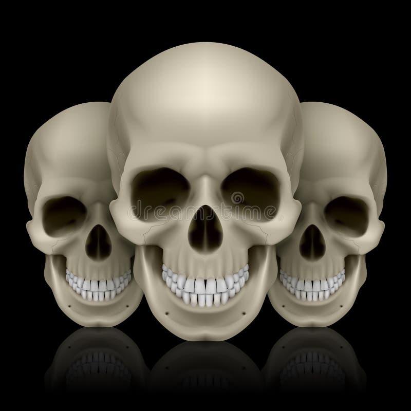 Download Three skulls stock vector. Image of doom, fear, horror - 39782214