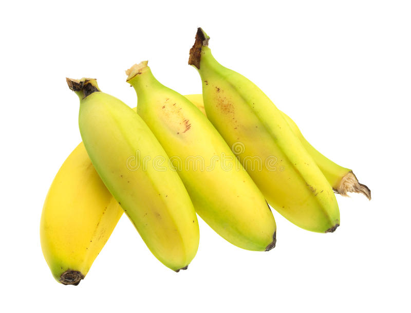 Three small bananas on a regular size banana stock photography