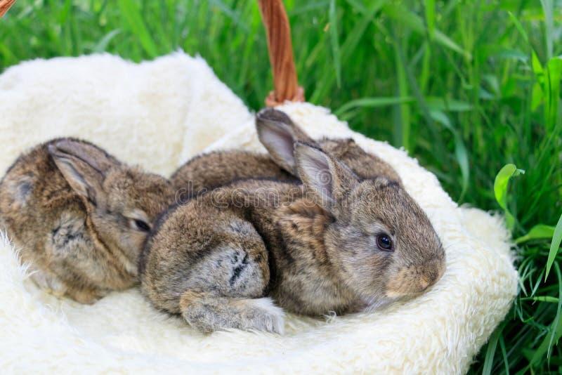 Three small and beautiful bunnies stock photos