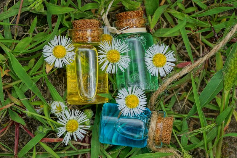 Three small glass bottles with oil among white daisies lie on green grass royalty free stock photo