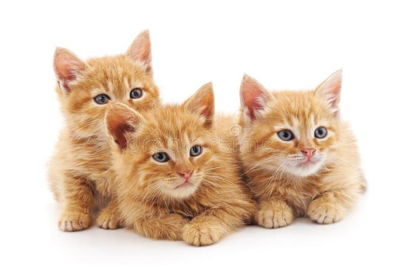 Three small kittens royalty free stock image