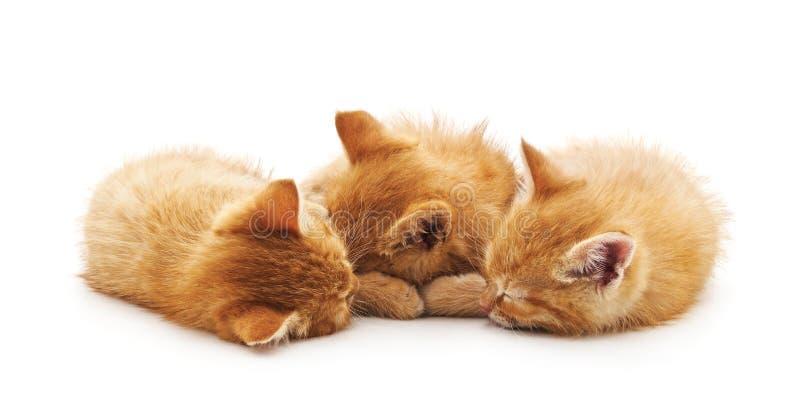 Three small kittens royalty free stock photos