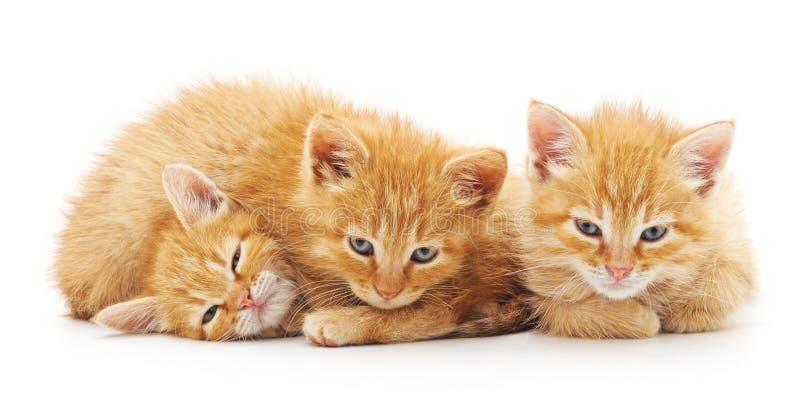 Three small kittens stock photography