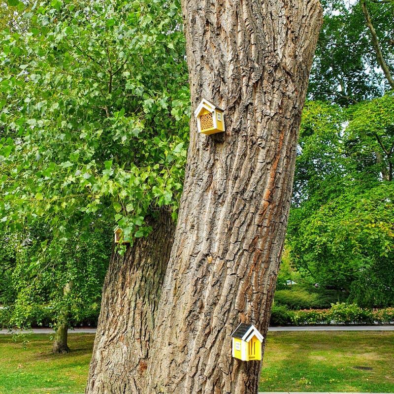 Yellow birdhouses on the tree stock photos