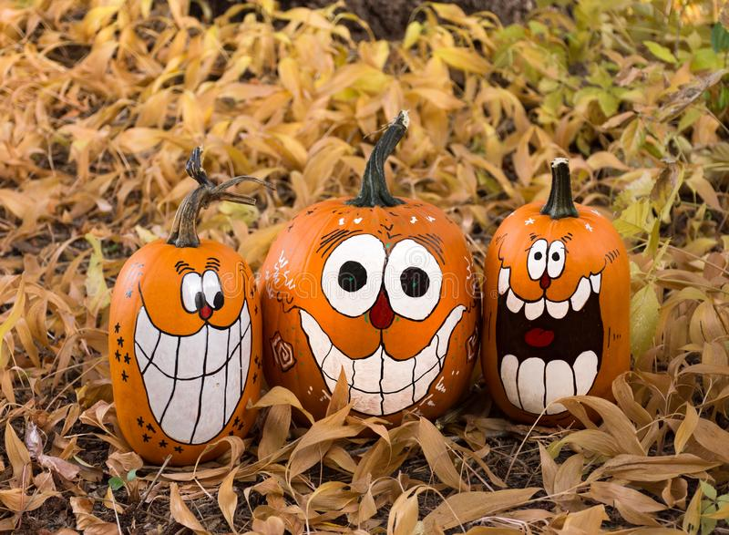 Three Pumpkins in Dried Leaves royalty free stock photography