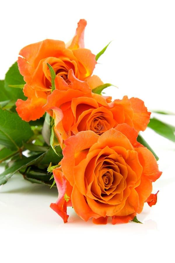 Three stacked orange roses