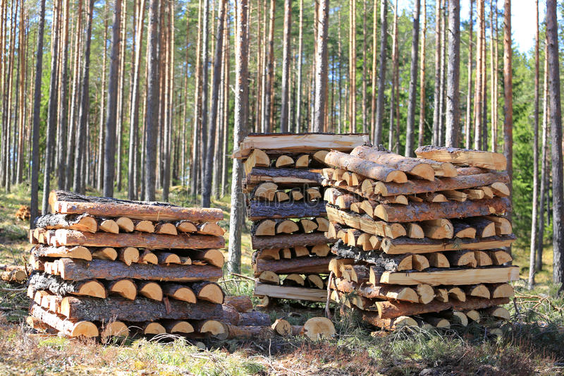 Three Stacks of Firewood in Forest royalty free stock photos