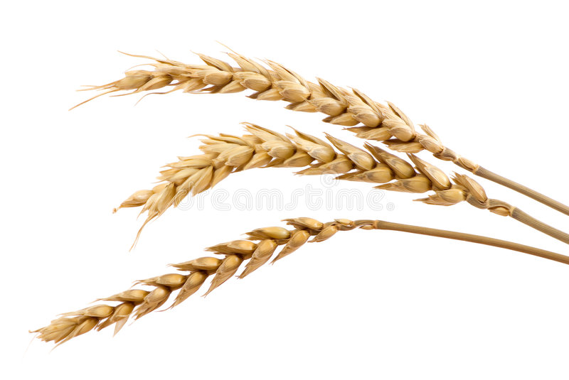 Three Stands Of Wheat Royalty Free Stock Photos