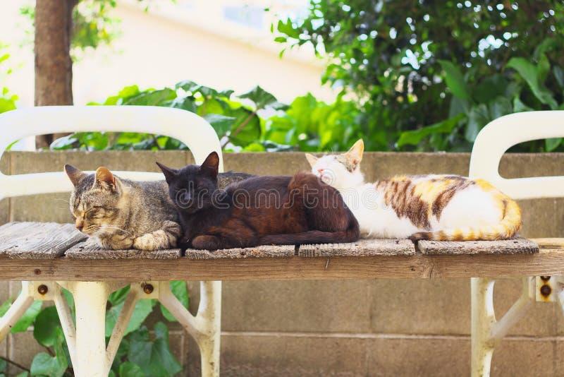 Three stray cats on a bench royalty free stock photo