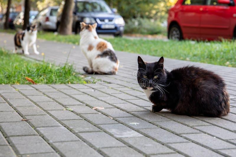 Three street cats royalty free stock photos