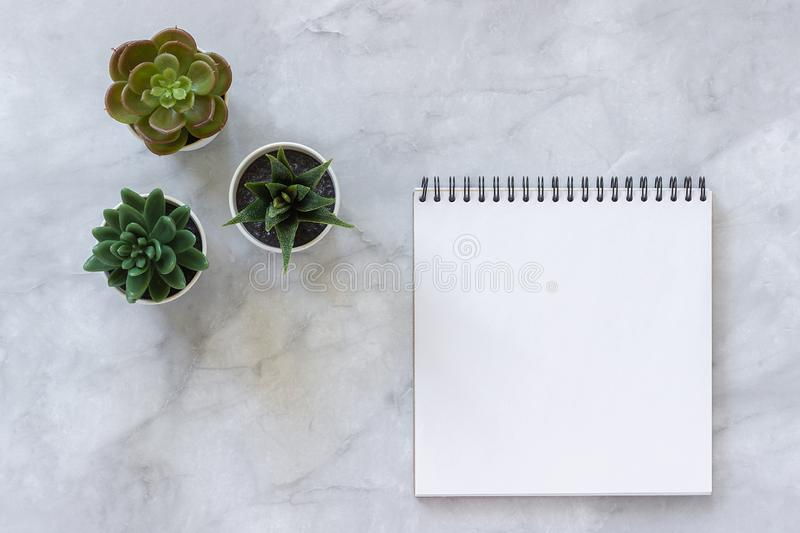 Three succulents and white open blank notebook on marble table background. Top view Mock up Flat lay Template for your text, royalty free stock photo