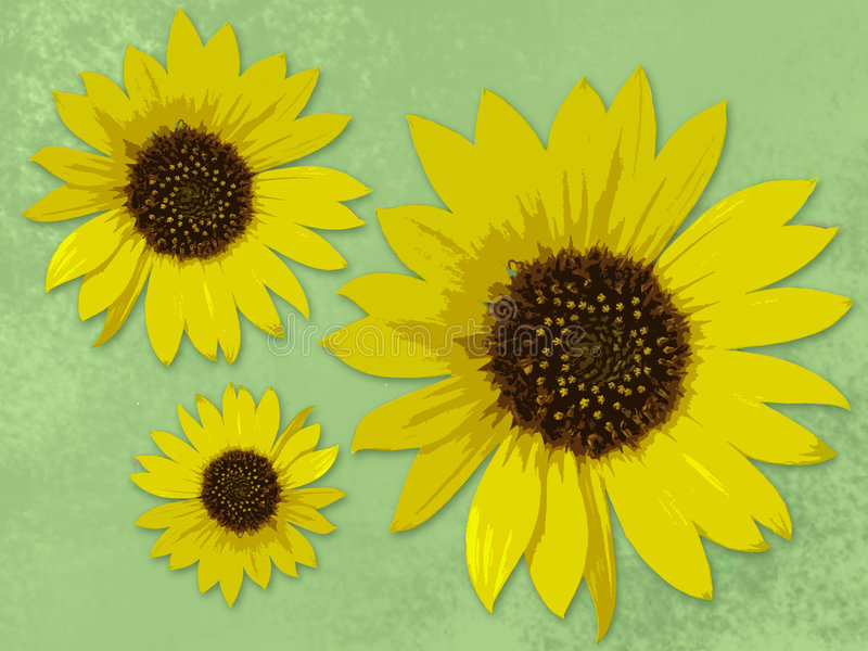 Three sunflowers stock illustration