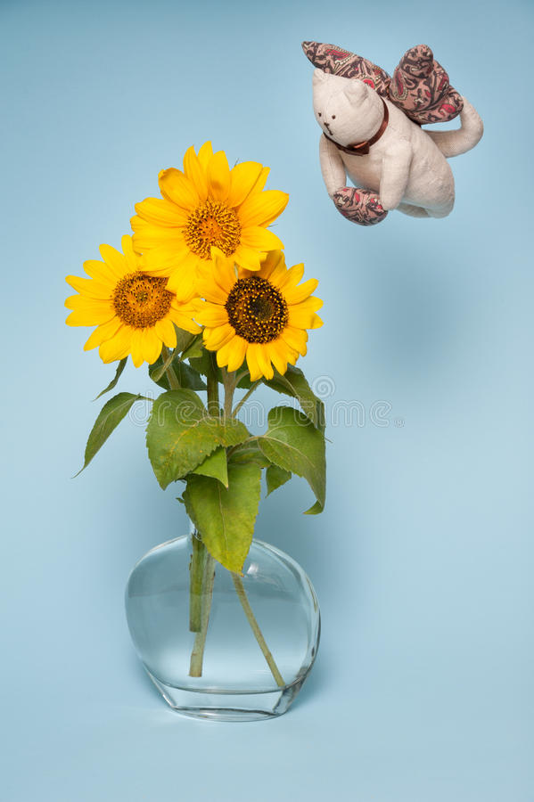 Three sunflowers in vase with water. Cat flyer. Isolated on blue background royalty free stock image