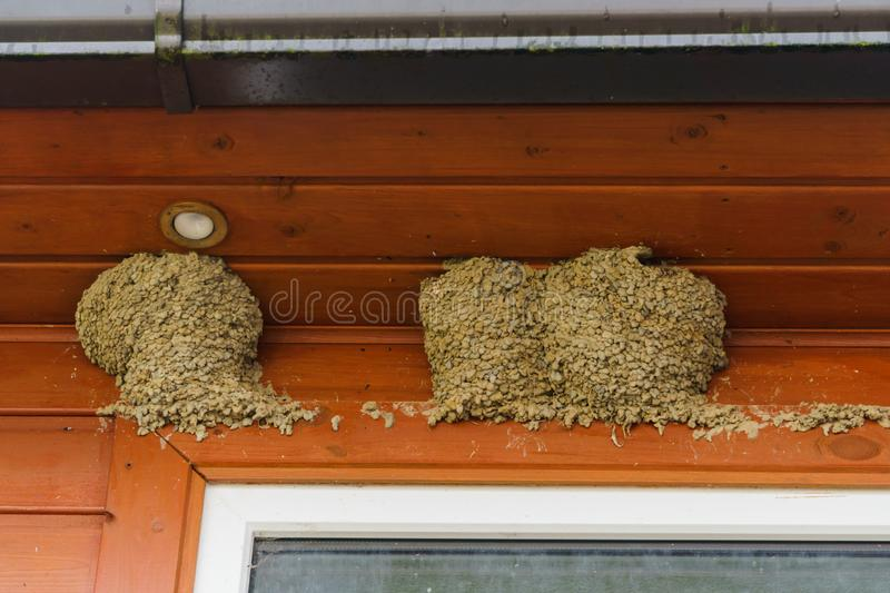 Three swallow nests under the roof of the house stock photo