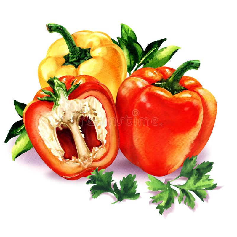 Three sweet red yellow peppers, green leaves parsley, bell pepper, fresh vegetables isolated, watercolor illustration vector illustration