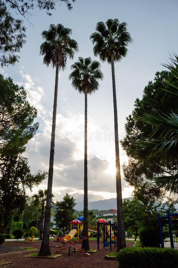 Three tall palm trees in the children`s park. royalty free stock photography