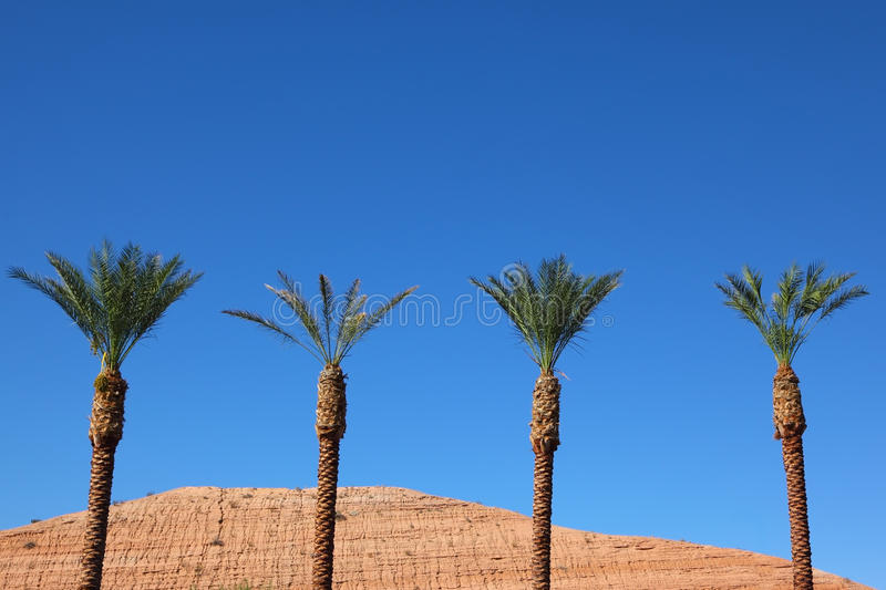 Three Tall Palm Trees In The Desert Stock Photo