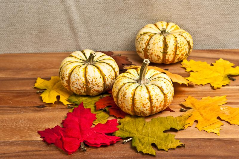 Three Thanksgiving pumpkins and dried leaves royalty free stock photos