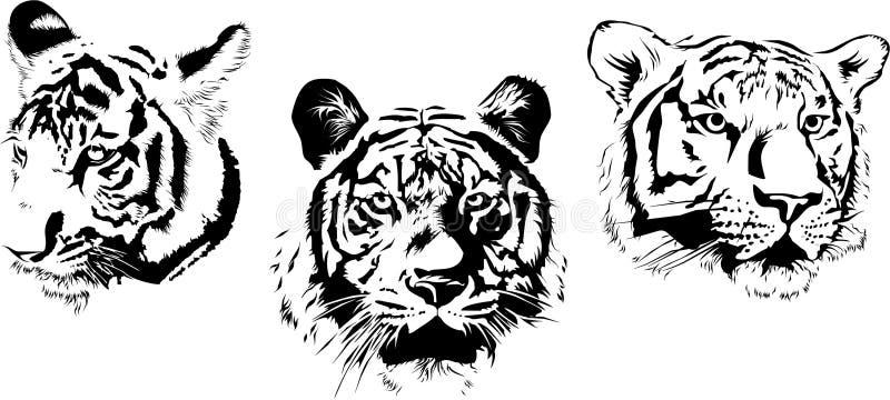 Three tigers muzzel stock illustration
