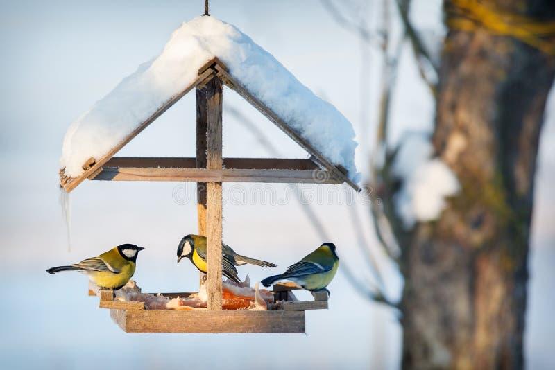 Three tit in the snowy winter bird feeder stock image
