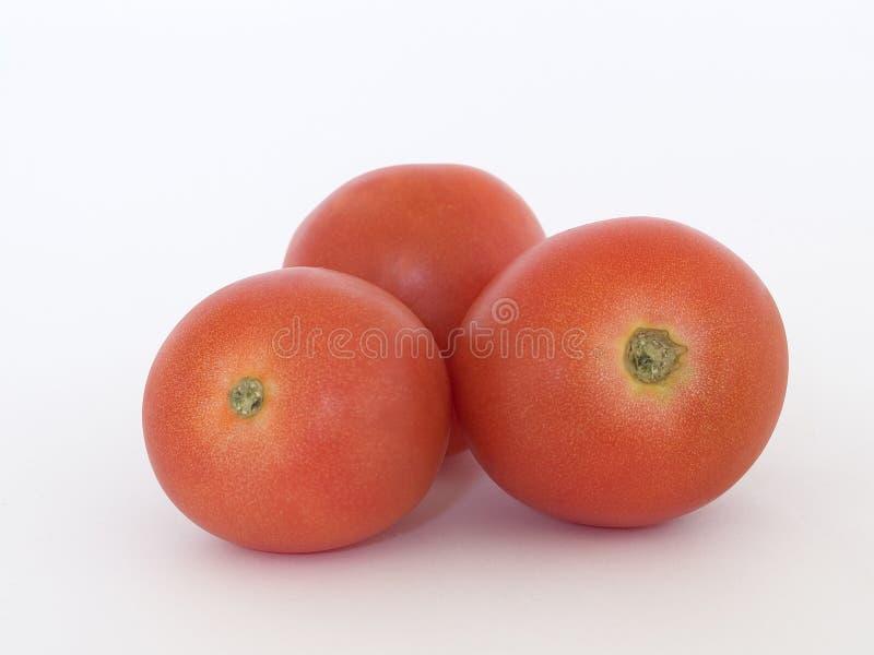 Three Tomatoes Free Stock Photo