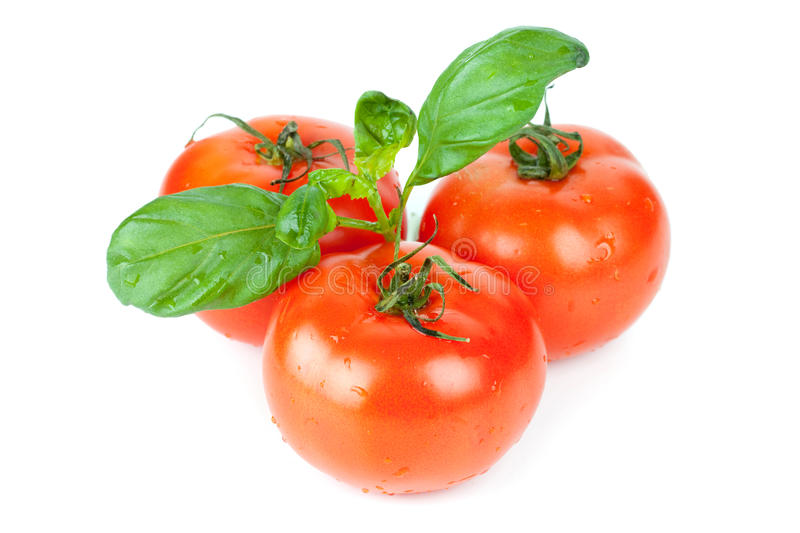 Download Three Tomatoes With Basil Leafs Royalty Free Stock Photography - Image: 12373827