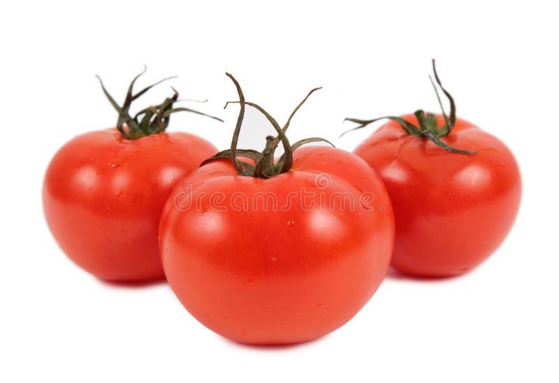 Three tomatos. On a white royalty free stock photo