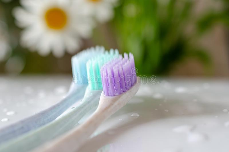 Three toothbrushes of different colors on white background royalty free stock image