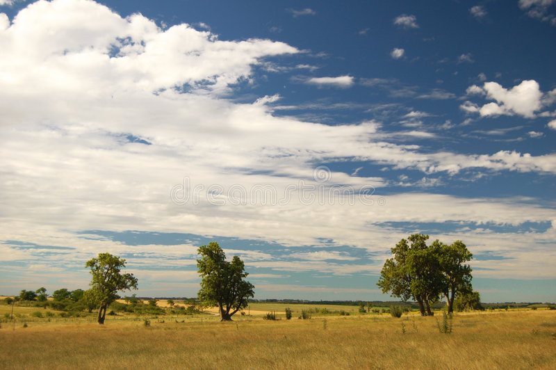 Three trees. Farm field. Uruguay royalty free stock photo
