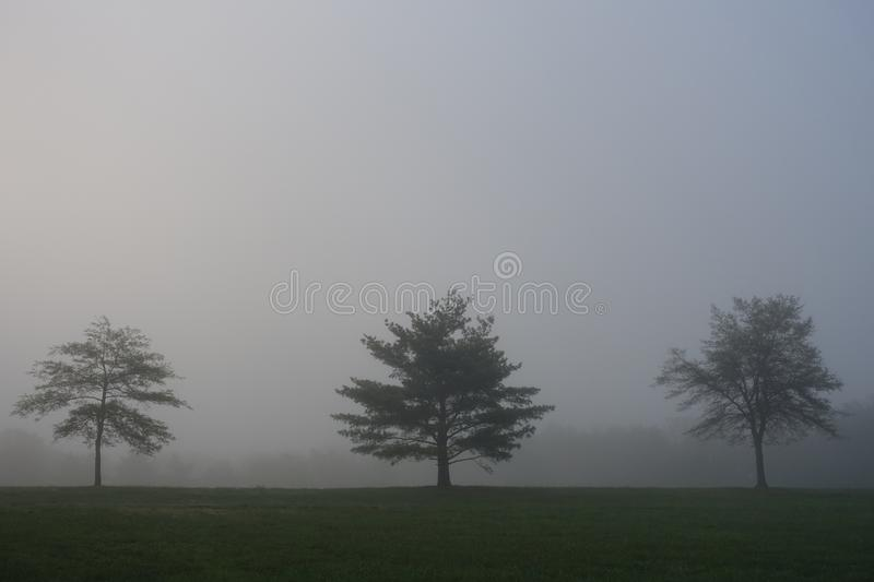Three trees in fog in Lakewood. Three trees standing on a field in mist in Lakewood, New Jersey royalty free stock images