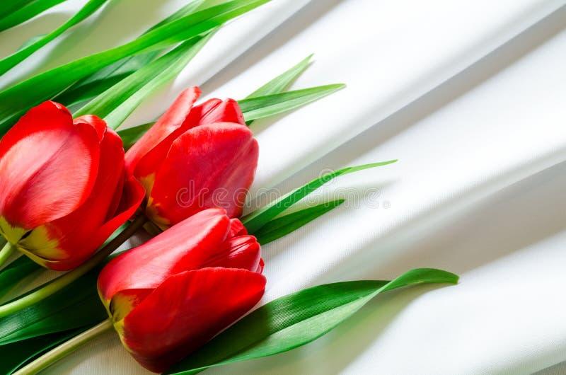 Three tulips on fabric royalty free stock photography