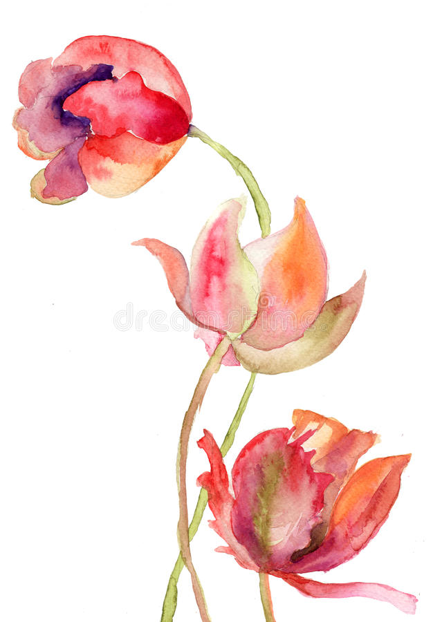 Three Tulips Flowers Royalty Free Stock Images
