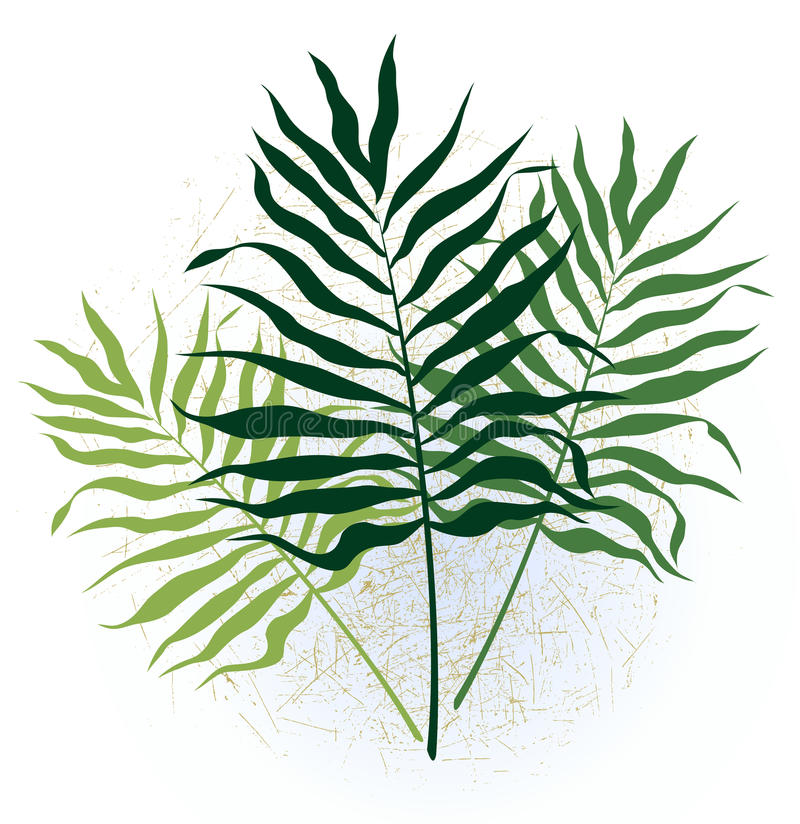 Free Three Twigs With Long Leaves Royalty Free Stock Photo - 10223515
