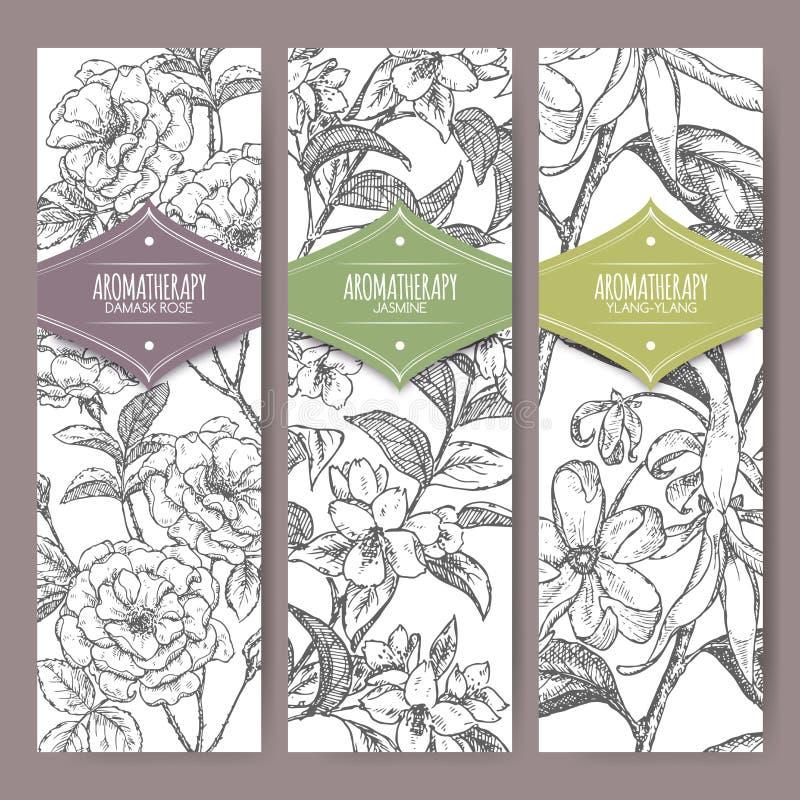 Three vector banners Damask rose, jasmine, ylang sketch. Aromatherapy series. royalty free illustration