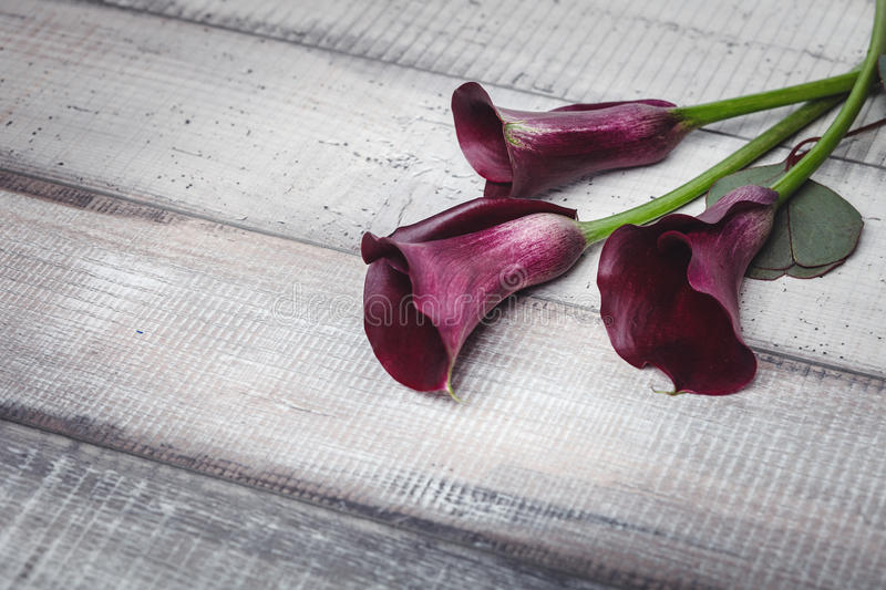 Three violet callas lie on a wooden table, space for text royalty free stock images