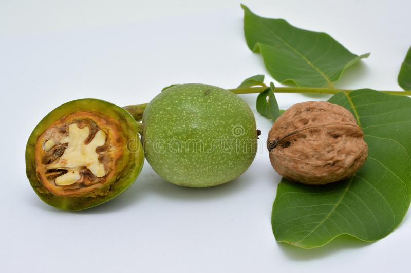 Ripe and dissected green walnuts with leaves. stock images